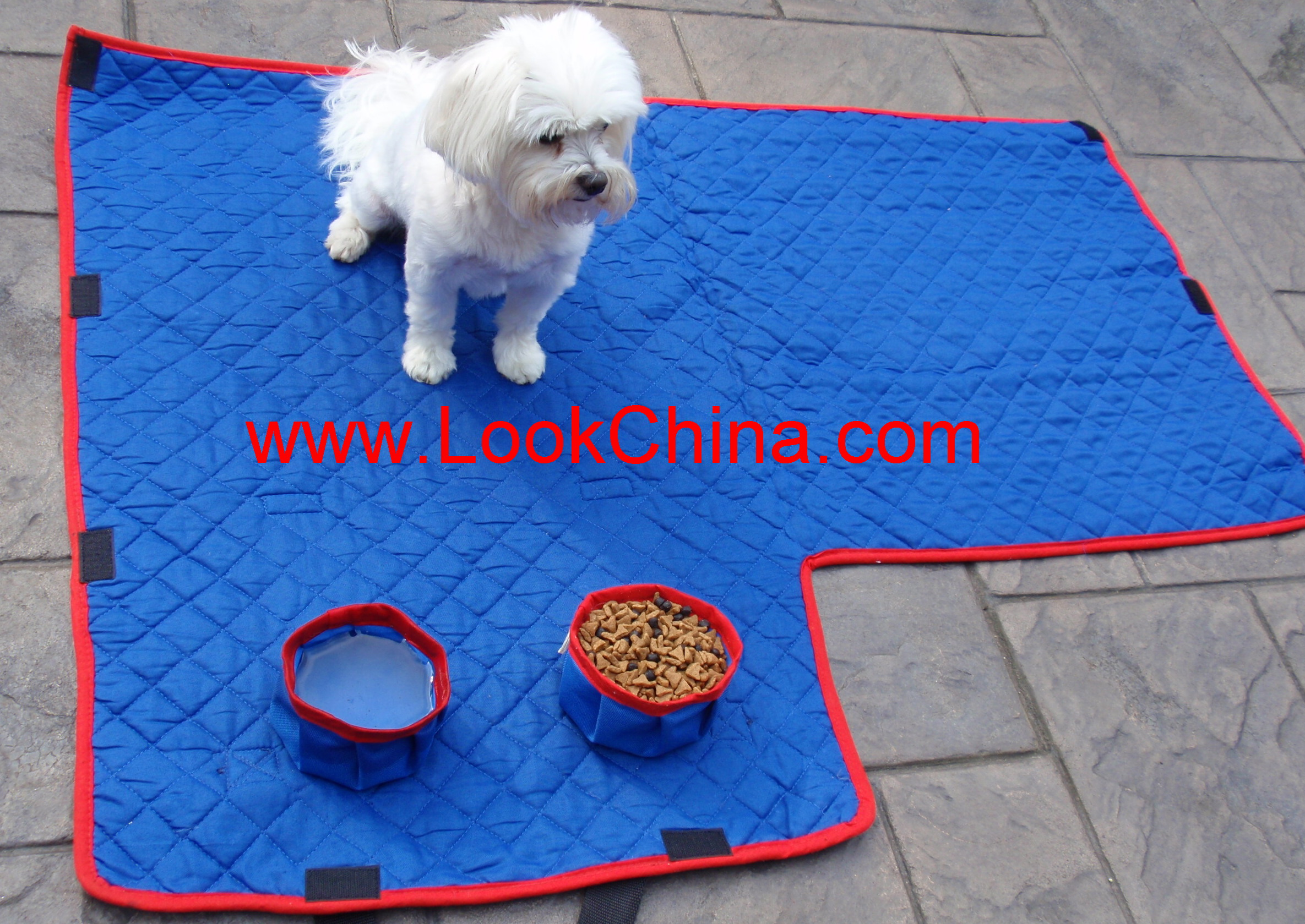 tibetan terrier toy fox terrier vizsla weimaraner welsh corgi welsh
